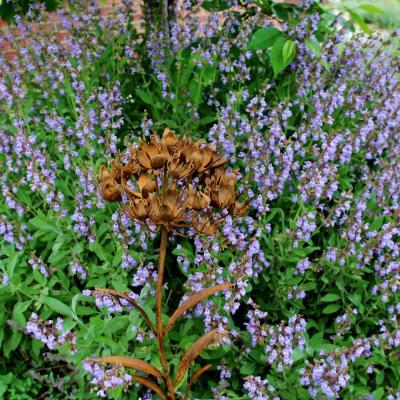 zahradní zápich obří 3D květ kalichy- rez